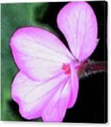 Geranium Blossom Canvas Print