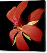 Geranium Flower Canvas Print