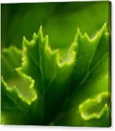 Geranium Leaf Canvas Print