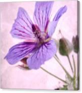 Geranium Maculatum Canvas Print