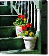 Geraniums And Pansies On Steps Canvas Print