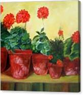 Geraniums In A Row-- Sold Canvas Print