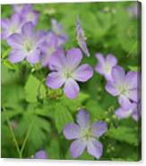 Geraniums Spring Wildflowers Canvas Print