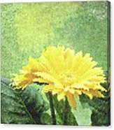 Gerber Daisy And Reflection Canvas Print