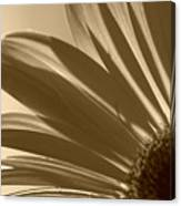 Gerber Flower Canvas Print