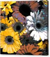 Gerbera Cluster Canvas Print