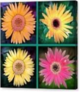 Gerbera Daisy Collage In Square Canvas Print