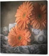Gerbera Daisy Trio Canvas Print