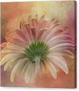Gerbera From The Back Canvas Print
