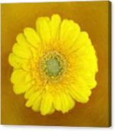 Gerbera - Id 16235-220247-8361 Canvas Print