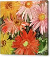 Gerbera Canvas Print