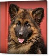 German Shepherd Puppy - Queena Canvas Print
