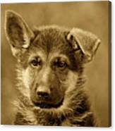 German Shepherd Puppy In Sepia Canvas Print