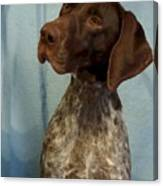 German Shorthaired Pointer 129 Canvas Print