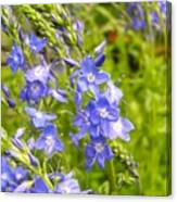 Germander Speedwell Canvas Print