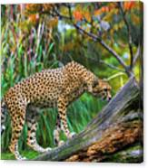 Getting The Scent Canvas Print