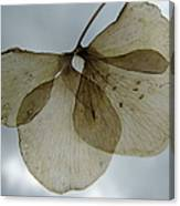 Ghost Of A Flower  Canvas Print