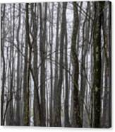 Ghost Swamp Canvas Print