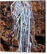 Ghostly Roots Canvas Print