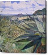 Giant Aloes At Pelegano Botswana 2008  Canvas Print