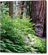 Giant Among The Forest Canvas Print