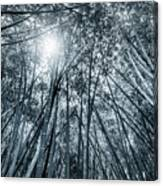 Giant Bamboo In Forest With Sunflare, Black And White Canvas Print