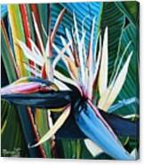 Giant Bird Of Paradise Canvas Print