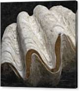 Giant Clam Canvas Print