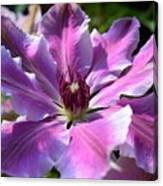Giant Clematis Canvas Print