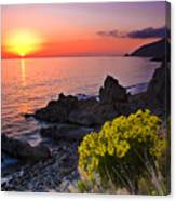 Giant Coreopsis Sunset 2 Canvas Print