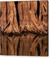 Giant Cypress Tree Trunk And Reflection Canvas Print