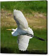 Giant Egret Grace Canvas Print