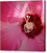 Giant Hibiscus Canvas Print
