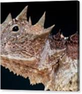 Giant Horned Lizard Canvas Print