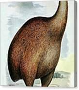 Giant Moa Dinornis Ingens, Cenozoic Bird Canvas Print