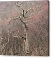 Giant Oak Tree Canvas Print