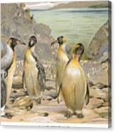 Giant Penguins, C1900 Canvas Print