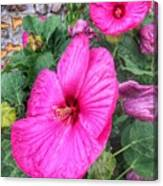 Giant Pink Hibiscus Canvas Print