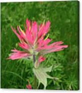 Giant Red Paintbrush Canvas Print