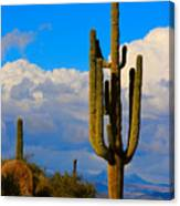 Giant Saguaro In The Southwest Desert  Canvas Print