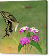 Giant Swallowtail Butterfly II Canvas Print