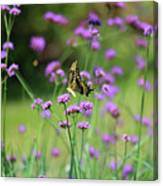 Giant Swallowtail Butterfly In Purple Field Canvas Print