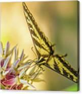 Giant Swallowtail With Yosemite Showy Milkweed Canvas Print