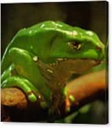 Giant Waxy Monkey Tree Frog Canvas Print