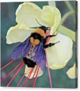 Gila Bumblebee Love Canvas Print