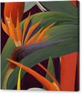 Ginger And Bird Of Paradise Canvas Print