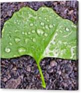 Ginkgo Leaf  Canvas Print