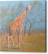 Giraffe - Safari - Summer 2008 Canvas Print