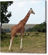 Giraffe 3 Canvas Print