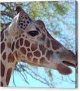 Giraffe 5 Canvas Print
